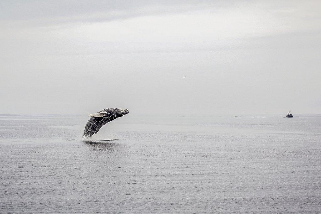 Whale near Tadoussac, Quebec